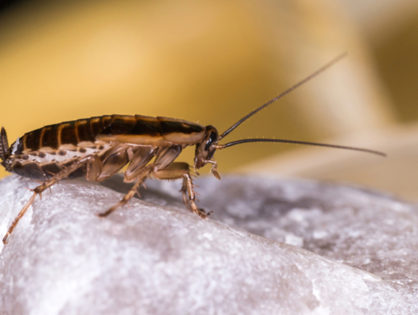 Why You Can't Keep Cockroaches Out of Your Home (VIDEO)