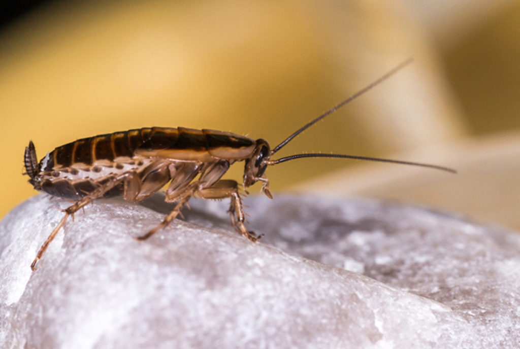Why You Can't Keep Cockroaches Out of Your Home – Local Records Office