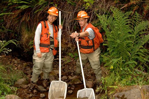 U.S. Forest Service hiring 1,000 seasonal workers across Oregon and Washington, full health benefits