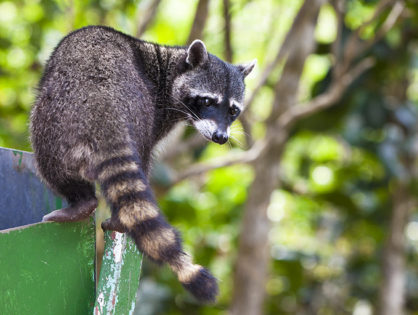 Prevent Home Invasions From these Wildlife Intruders