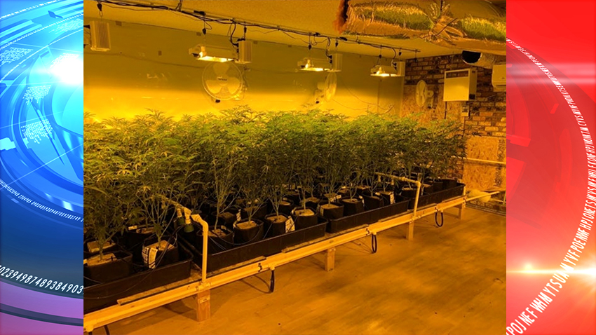 Police crackdown on illegal marijuana house in Contra Costa County