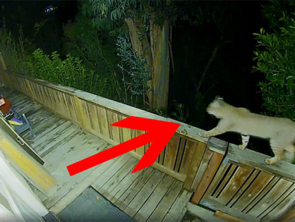 Bobcat surprises La Jolla family (VIDEO)